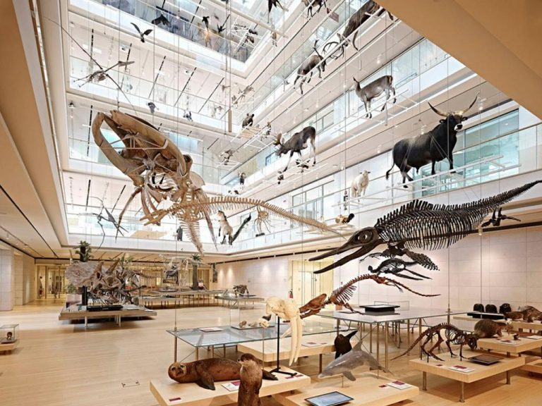 museo-bamibini-muse